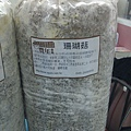 20121213-07-珊瑚菇走菌完成