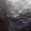 20121216-02-珊瑚菇的側面,也開始長出一大堆