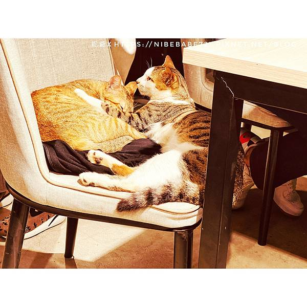 20210412貓禾咖啡_210412_10.jpg