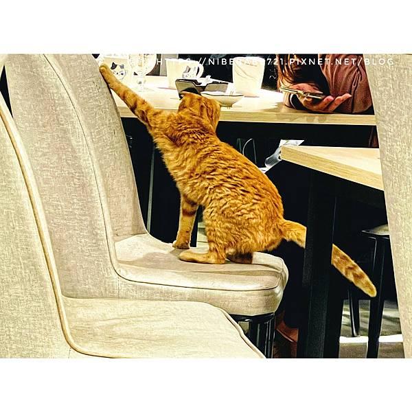 20210412貓禾咖啡_210412_12.jpg