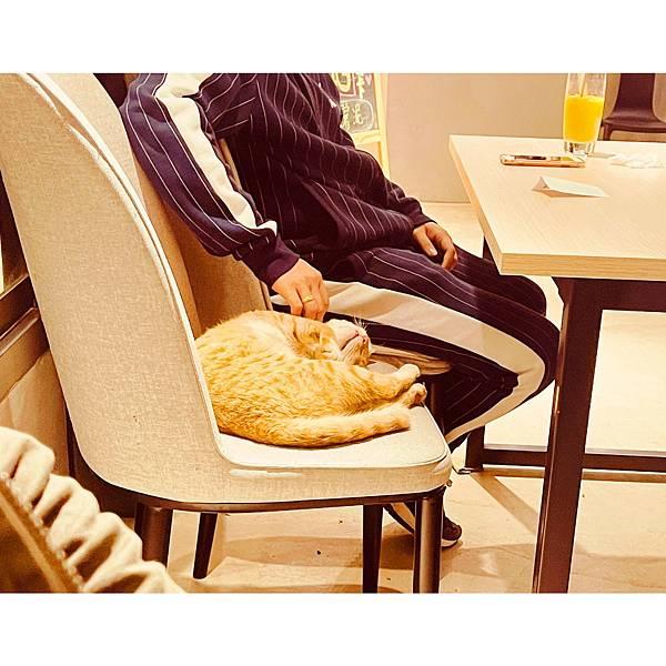 20210412貓禾咖啡_210412_14.jpg