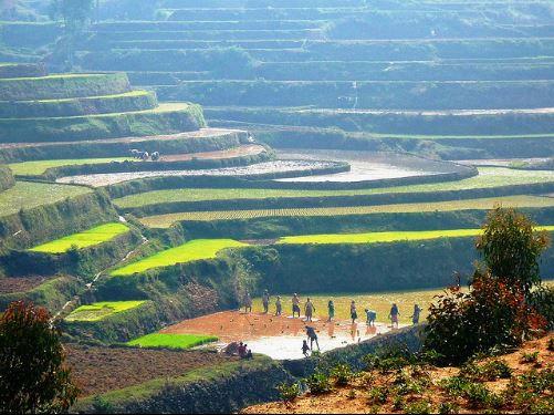 Terraces-of-rice-Madagascar