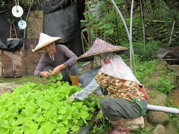 圖十  姜旭岡校長事母至孝每天都會陪著高齡的媽媽到菜園種菜孝親感人(6)