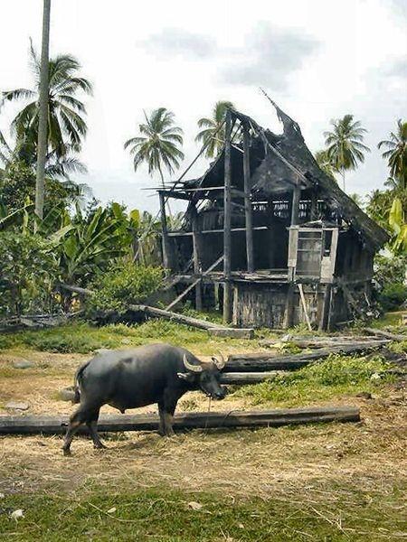 450px-Indonesia-Bull