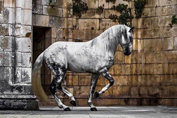 id12846093-ET-Mayra-Vidal-Lusitano-horse-1-600x400