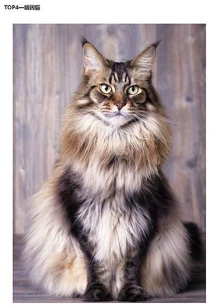 FireShot Capture 145 - 世界上十大最美貓品種排行,你家主子上榜了嗎? _騰訊新聞 - new.qq.com