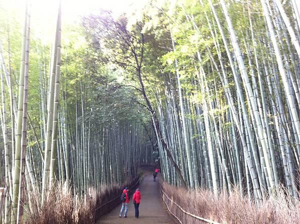 竹林京都.jpg