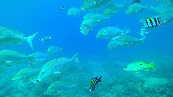 海中1.jpg