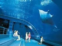 「沖繩水族館」的圖片搜尋結果