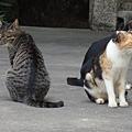 南普陀三貓組