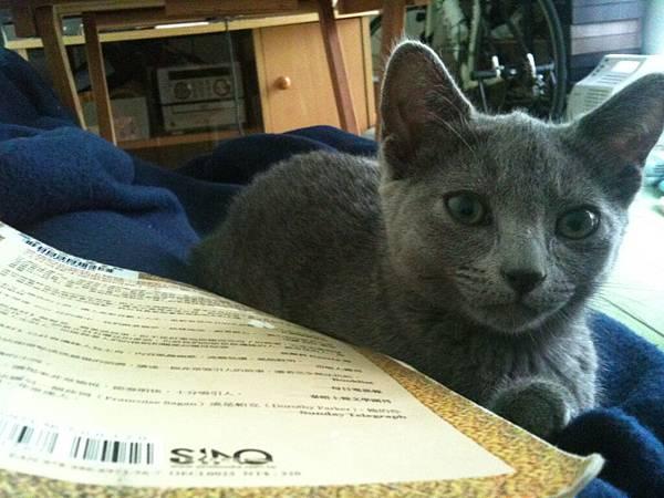 Сафина愛讀書