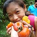 自己摘的柿子特別好吃