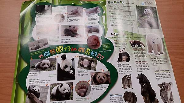 免費索取:可愛大熊貓海報
