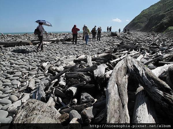 11-219峰高繞路段前的海岸漂流木.JPG