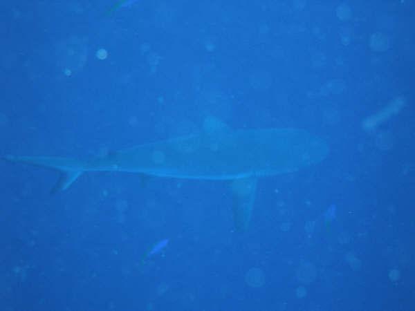 帛琉潛水 040.jpg