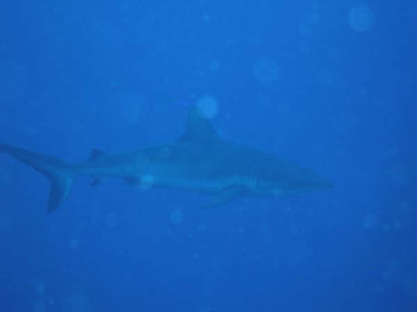 帛琉潛水 041.jpg