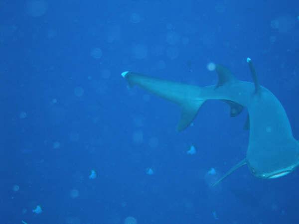 帛琉潛水 044.jpg
