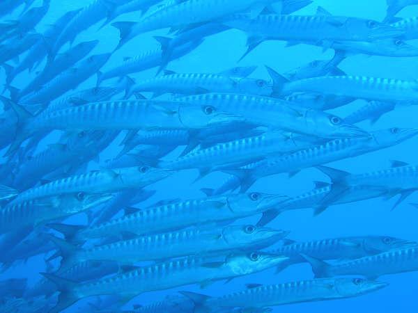 帛琉潛水 055.jpg