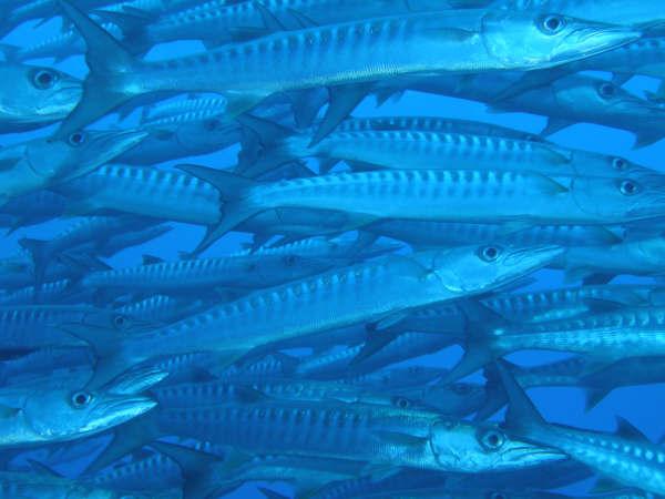 帛琉潛水 056.jpg