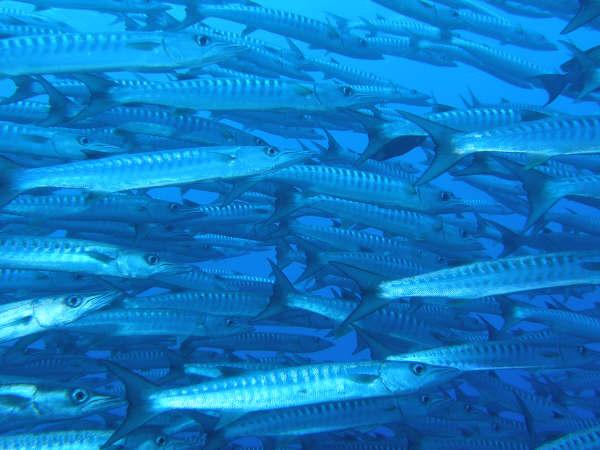 帛琉潛水 057.jpg
