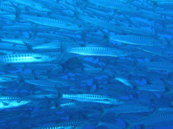 帛琉潛水 058.jpg
