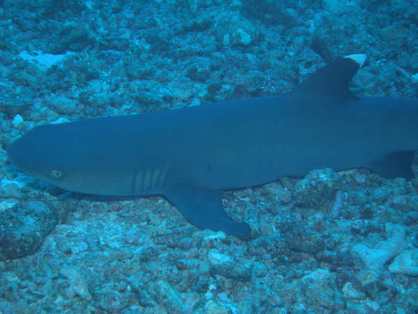 帛琉潛水 137.jpg