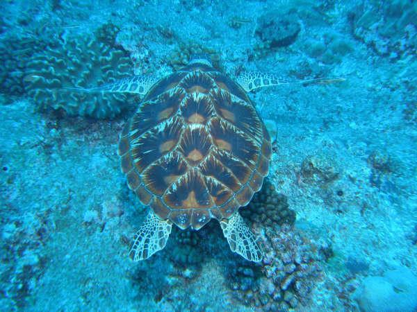 帛琉潛水 140.jpg