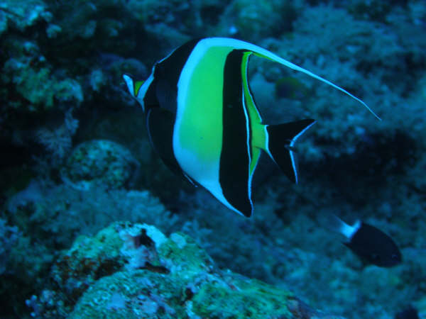 帛琉潛水 156.jpg