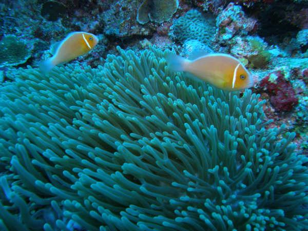 帛琉潛水 159.jpg