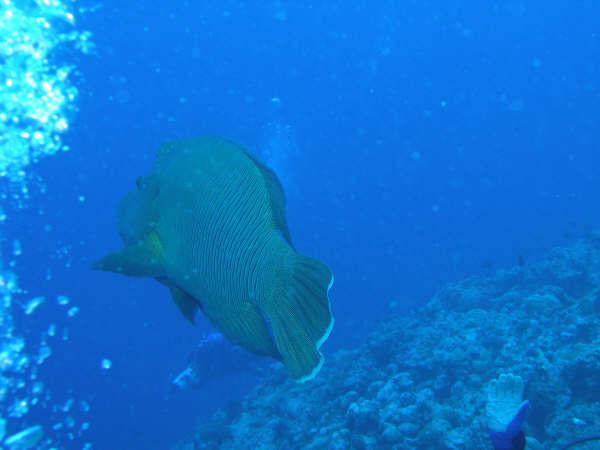 帛琉潛水 161.jpg