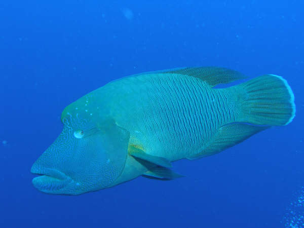 帛琉潛水 162.jpg
