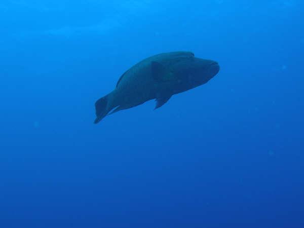 帛琉潛水 164.jpg