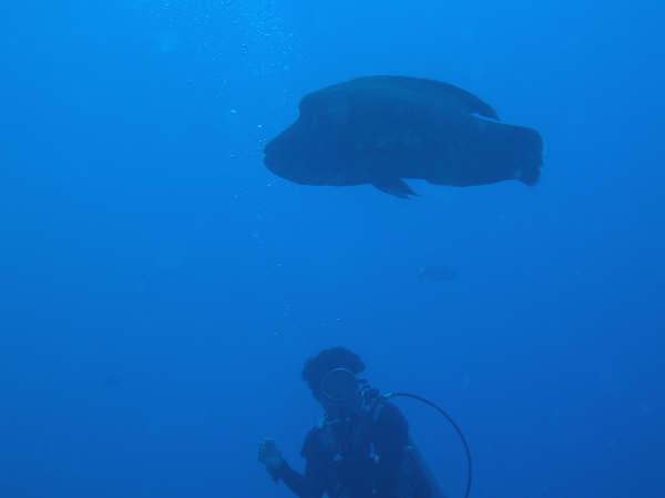 帛琉潛水 166.jpg