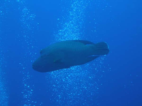 帛琉潛水 168.jpg