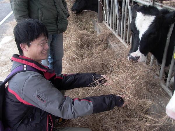 牛爸試圖要餵牛