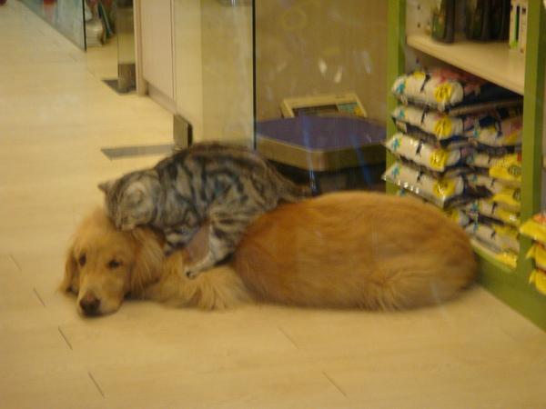 奇怪的狗猫們