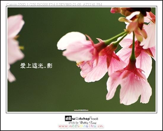 IMG_3802-1s.jpg