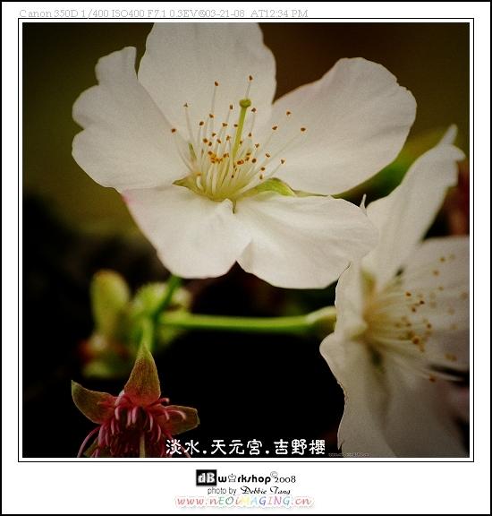 IMG_3766-1s.jpg