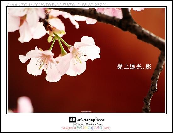 IMG_3779-1s.jpg