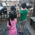 台中益健羊乳牧場