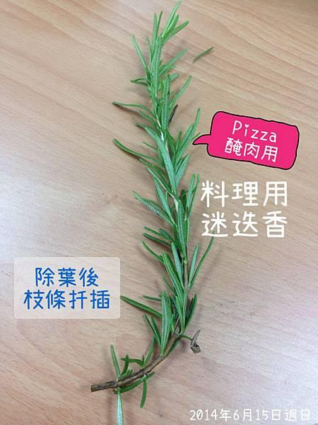 料理用迷迭香.JPG