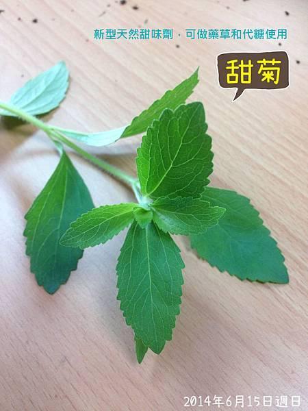 甜菊2.JPG
