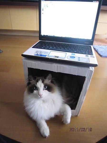 這是我的箱子ㄟ!你要用再去找一個