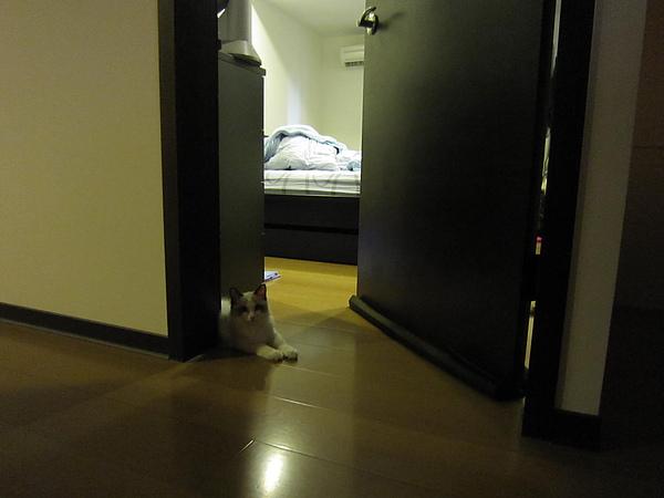 Lion很愛趴在門口