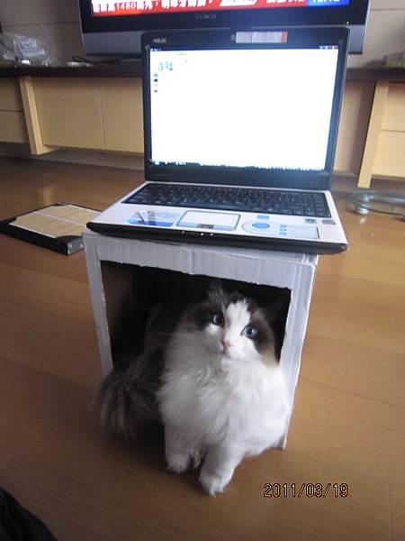 """媽~你幾時要把電腦從""""我的箱子""""上面拿走"""