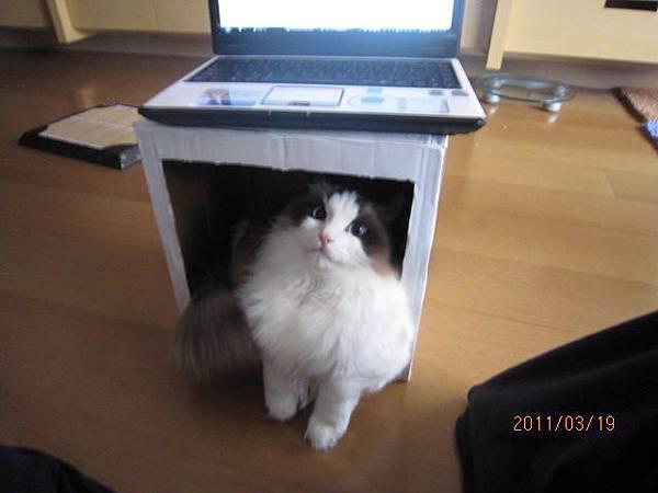 Lion躲到箱子裡...