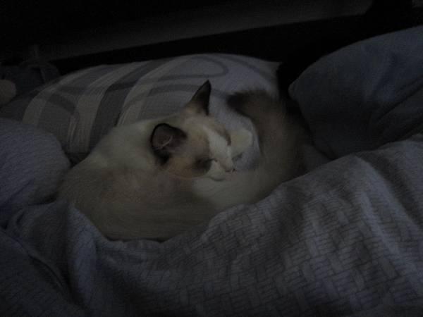 2010.8.28下午睡午覺~佔據媽媽的位子