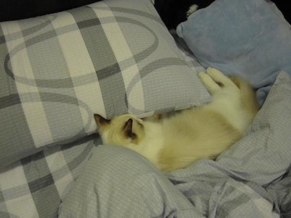 2010.8.28睡在枕頭邊的各個角落