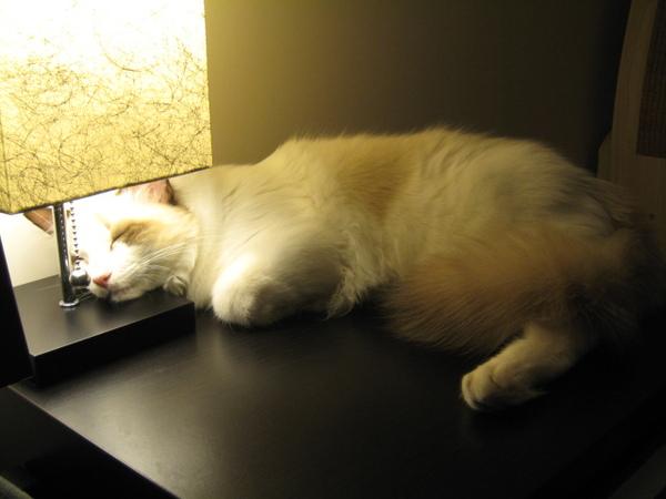 2010.10.16靠在床頭燈上~這麼亮都睡的著?