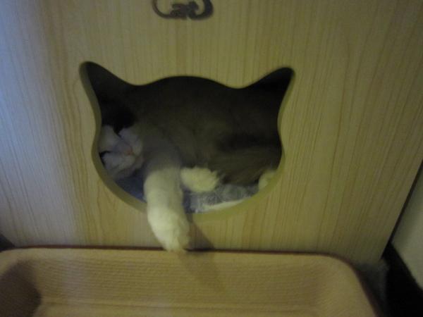 2010.2.22難得躲在洞裡睡覺